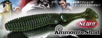 ammoniteshad2